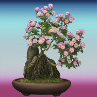 Hi Res Bonsai Tree 02