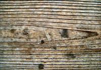 Wood 0951