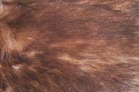 Fur_Texture_0001