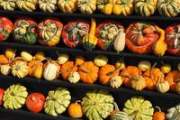 Pumpkin_0005