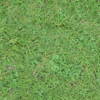 Grassy Ground02