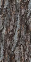Larch Tree Bark