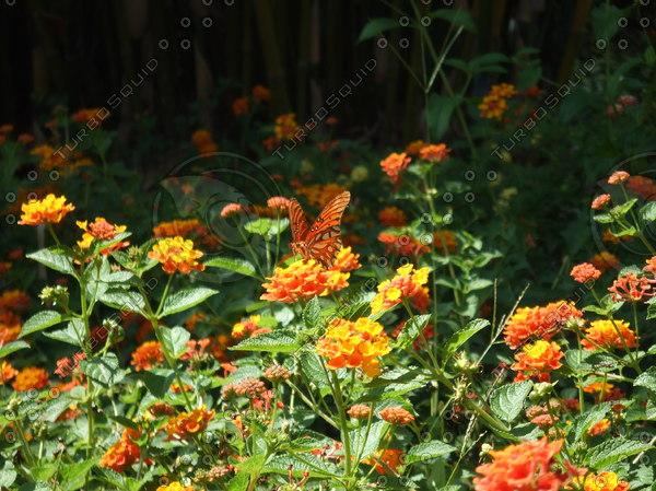 Monarch_Butterfly_RG.JPG