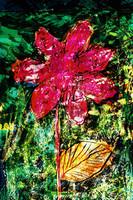 flower Az 00008