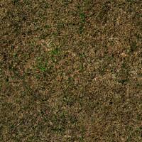 Grass 1a
