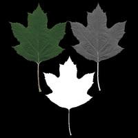 Hydrangea Leaf Texture Set