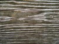 Wood 0954