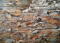 Tree Bark 0967