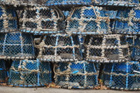 Lobster Trap_0001
