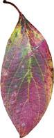 leaf 9