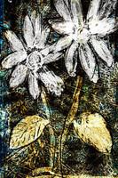 flower Az 00009