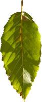leaf28