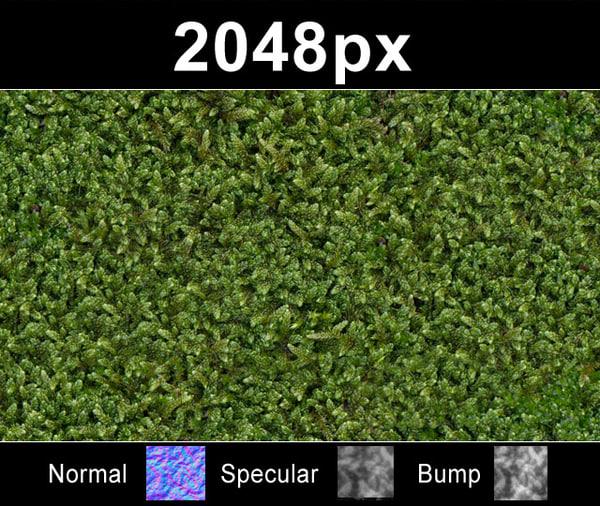 moss_01_close_2k.jpg