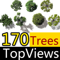 Birds Eye View Trees