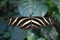 Butterfly_0002