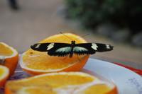 Butterfly_0007