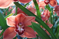 Flowers_Orchid_0005