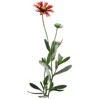 Flower_V_15
