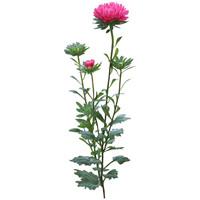 Flower_V_19