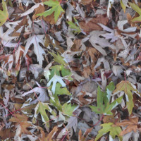 Tiled Leafes