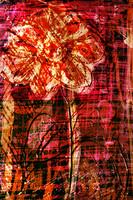 flower Az 00006