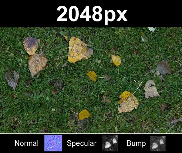 lawn2_tex_close.jpg