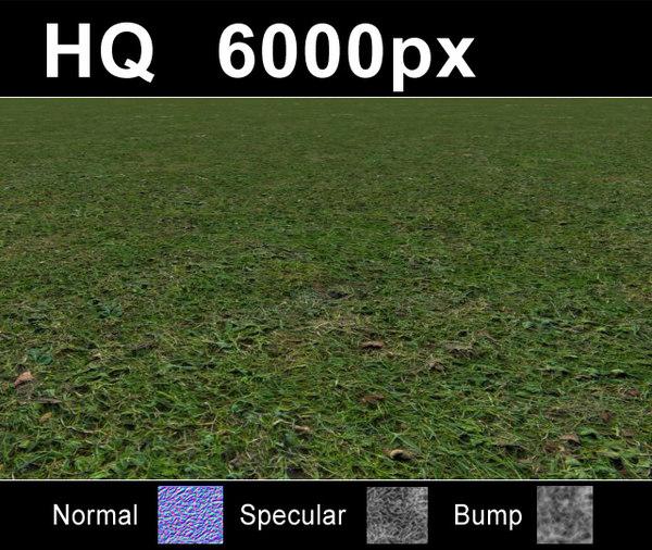 lawn5_close.JPG
