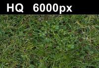 Lawn 5 - Hi Res