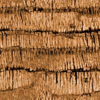 Seamless Palm Tree Bark Texture