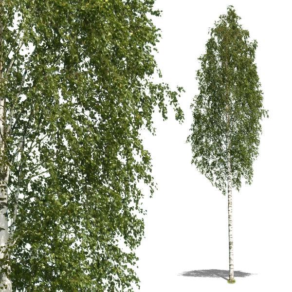 tree59p.jpg
