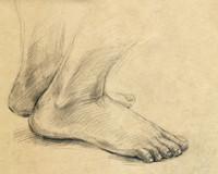 sole (legs)