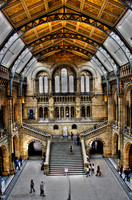 BRITISH NATURAL HISTORY MUSEUM [LONDON, UNITED KINGDOM]