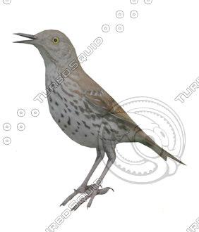 Bird_Brown_Thrasher_LP_No_Wings.jpg