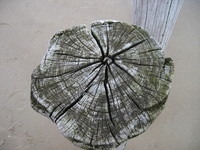 Log_Texture_0001