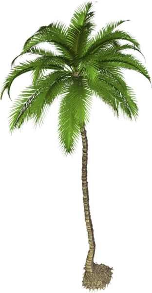 Palm tree 02_2.png