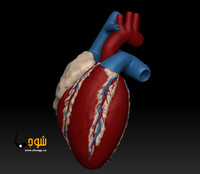 ZBrush heart