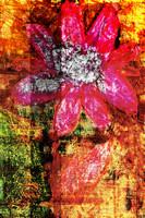 flower Az 00003
