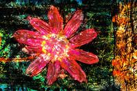 flower Az 00011