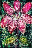 Flower Az 00026