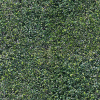 foliage_hedge