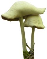 mushroom_1