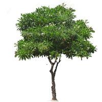 suicide tree