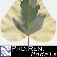Leaf texture B