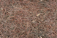 Tileable Pinestraw Texture