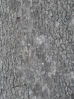 Bark_01