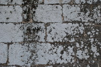Seawall_Texture_0012