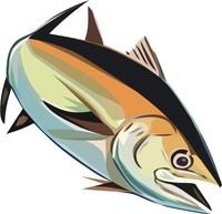 fish27