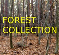 mixed forest collection