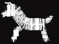abstract black and white zebra isolated on black background