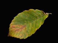 3D_max_textures_Leaf